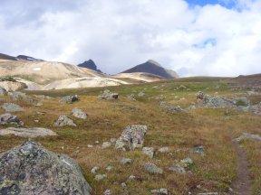 The alpine tundra in El Paso Crek