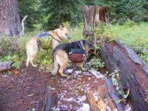 Draco and Leah, panniers loaded