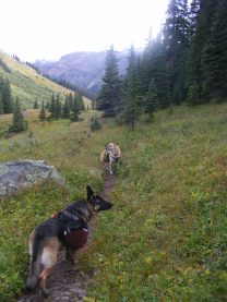 Leah and Draco on the East Fork Trail No. 228