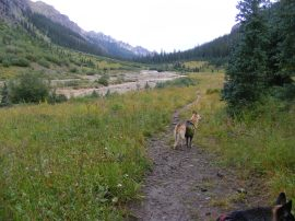 Draco backpacking on the East Fork Trail No. 228 in the Uncompahgre Wilderness