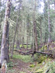 The rain and snow have created this moist sub-alpine forest on East Fork Cimarron River