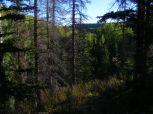 Shadowy forest