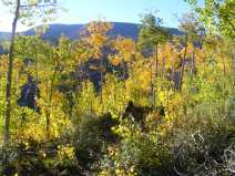 Changing aspen on Whale Creek