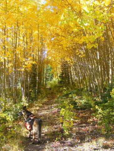Leah on Whale Creek Trail No. 780, in a tunnel of aspen