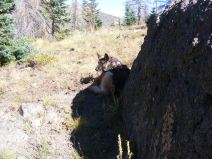 Leah in the shade of a boulder on Whale Creek