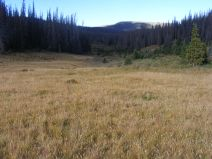 The small meadow where the South Fork Saguache Trail No. 781 meets the Halfmoon Pass Trail No. 912