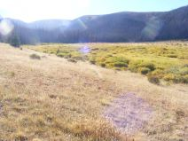 The meadow on Twin Peaks Creek where the Halfmoon Pass Trail No. 912 meets the Twin Peaks Creek Trail No. 914