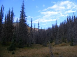 From camp, looking up towards Halfmoon Pass