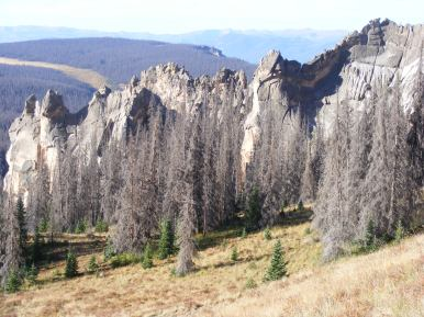 Note the young trees amid the dead forest, Wheeler Geologic Area