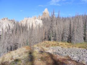 The outcropping at Wheeler Geologic Area sprouting up over the dead forest
