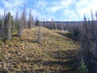 Looking up a grassy slope towards Palmer Mesa