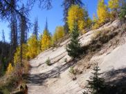 The loop trail and late Summer aspen at Wheeler Geologic Area