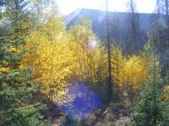 Late Summer aspen at Wheeler Geologic Area