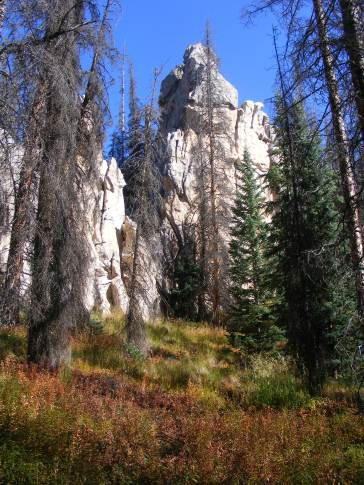 Odd shapes seen through the forest at Wheeler Geologic Area