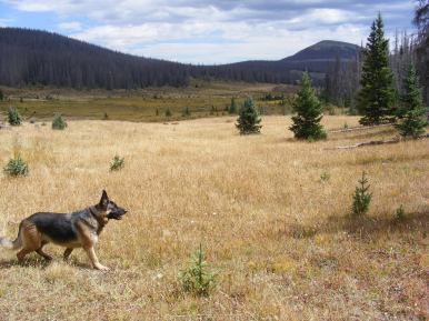 Leah near Twin Peaks Creek
