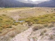 Leah and Draco on Twin Peaks Creek Trail No. 914, crossing the namesake peak