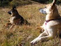 Leah and Draco at camp in La Garita Mountains