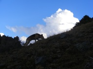 Draco on our evening hike above camp in La Garita Wilderness