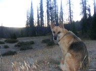 Draco, near camp, during breakfast