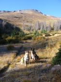 Draco and Leah ready to go, on Halfmoon Pass Trail No. 912 under the namesake pass
