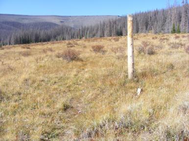 Trail pole and faint South Fork Saguache Trail No. 781