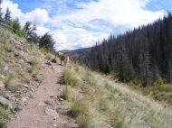 Draco on South Fork Saguache Trail No. 781