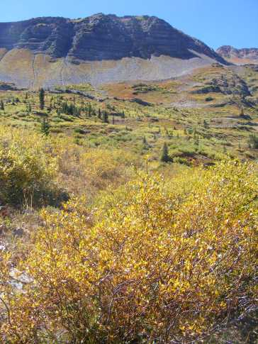 Yellowing willows in Baxter Basin