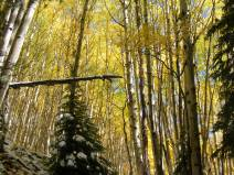 An alpenglow of sorts lights up the yellow aspen and that illumination in turn lights the shadowed floor