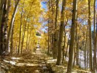 Autumn near the headwaters of Ohio Creek