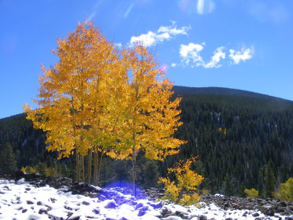Aspen of Glory, and why early Autumn is so excellent