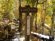 Sign post for the Carbon Trail No.436 on the Gunnison National Forest