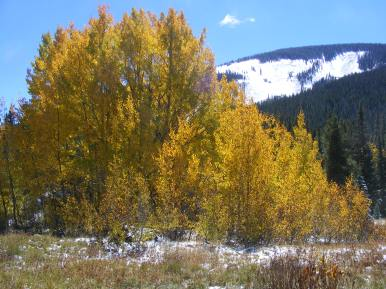 Aspen near divide between Ohio and Carbon Creeks
