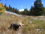 Leah and Draco on the Carbon Trail No. 436, looking ahead to the divide and Whetstone Mountain