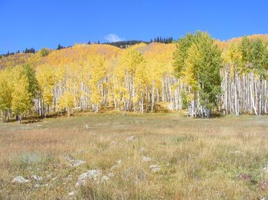 Aspen colors on Carbon Creek's headwaters