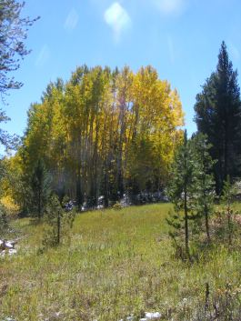Pretty meadow on Carbon Creek