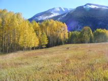Yellow aspen under Carbon Peak
