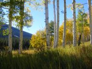 In the aspen forest of Carbon Peak