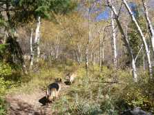 Leah and Draco on Farris Creek Trail No. 409, Gunnison National Forest