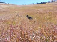 Draco and Leah romping in a lush meadow