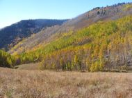 Aspen groves and meadow on Walrod Gulch