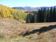 Walrod gulch in Fall