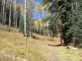 Forested trail junction in Walrod Gulch