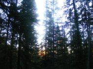 Along Horn Basin Creek, morning light inthe forest