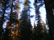Early shafts of orange morning light, Horn Fork Creek