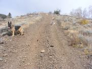 Leah and Draco on Gunnison National Forest Road 882.1C