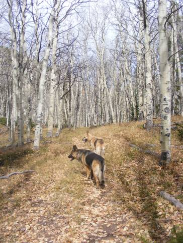 Leah and Draco on Gunnison National Forest Trail No. 611