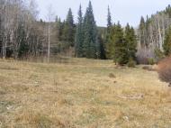 Pretty meadow on Bear Gulch