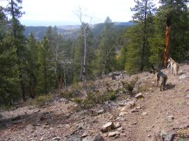 Leah and Draco looking into East Willow Gulch, on Gunnison National Forest Trail No. 610
