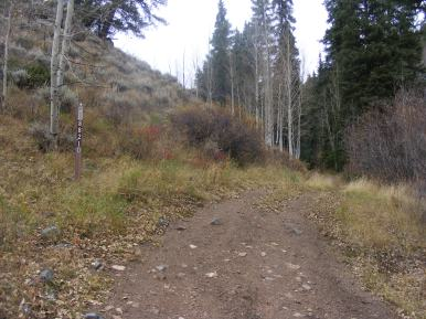 A road not taken, looking up East Willow Creek and Gunnison National Forest Road 882.1D