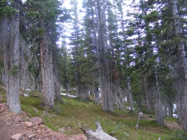 The forest on the Great Divide in the Sierra Madre south of Wyoming 70